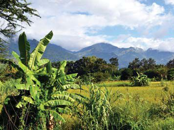 Tanzania scenery of mountains and plants
