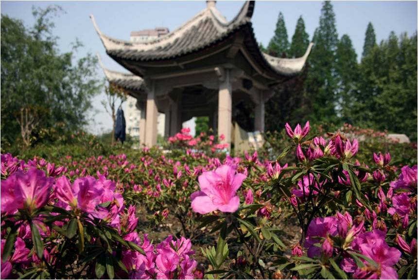 Traditional pavilion surrounded by pink flowers