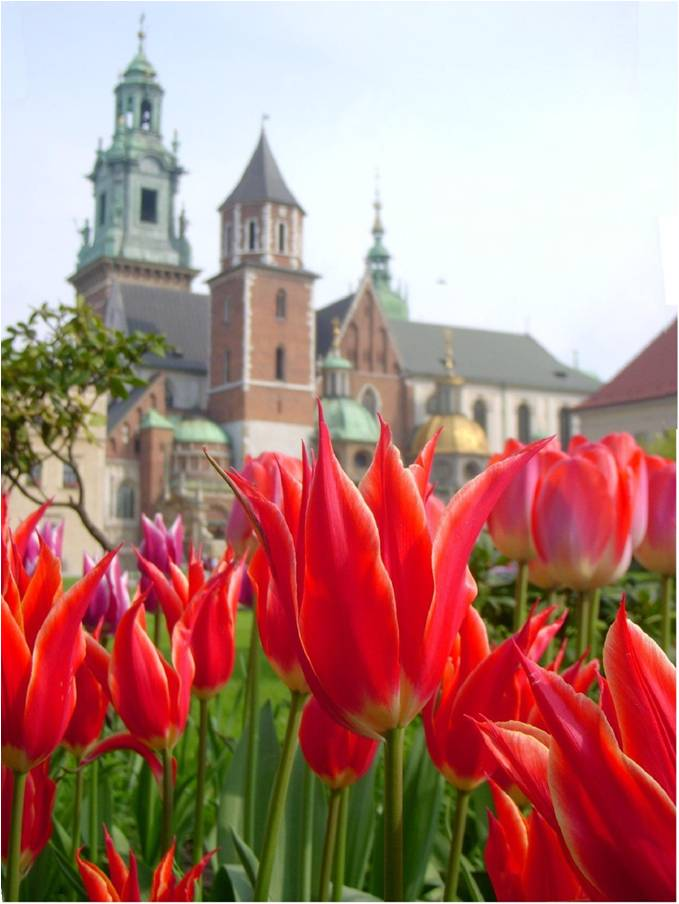 Flowers in front of Polish Cathedral